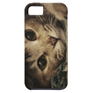 Close up of a tabby cats eyes iPhone 5 covers