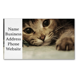 Close up of a tabby cats eyes magnetic business cards