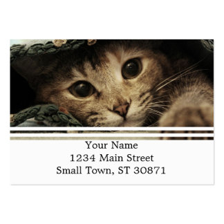 Close up of a tabby cats eyes pack of chubby business cards