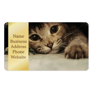 Close up of a tabby cats eyes pack of standard business cards
