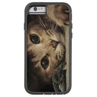 Close up of a tabby cats eyes tough xtreme iPhone 6 case