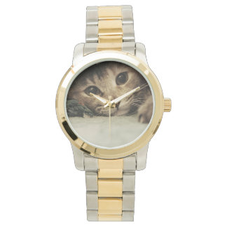 Close up of a tabby cats eyes watch