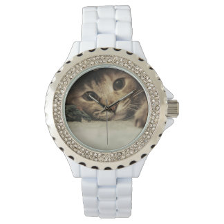 Close up of a tabby cats eyes wrist watches