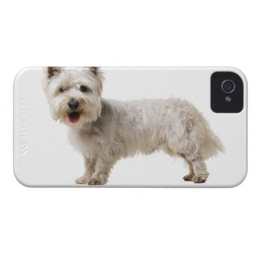 Close up of a terrier iPhone 4 case