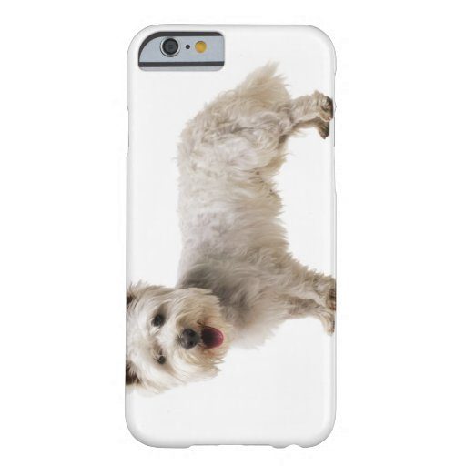 Close up of a terrier iPhone 6 case
