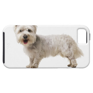 Close up of a terrier iPhone 5 case