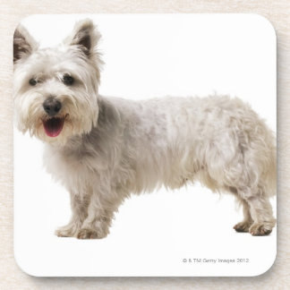 Close up of a terrier drink coasters