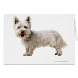 Close up of a terrier greeting card