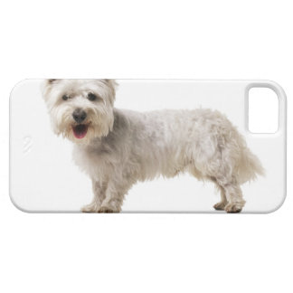 Close up of a terrier iPhone 5 cases