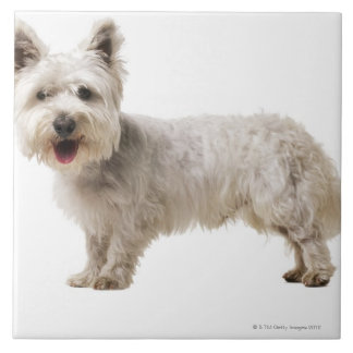 Close up of a terrier large square tile