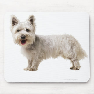 Close up of a terrier mouse pads