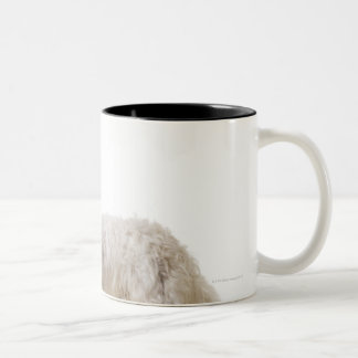 Close up of a terrier Two-Tone coffee mug