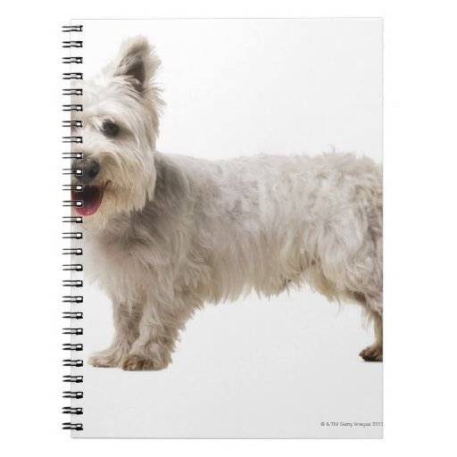 Close up of a terrier note book