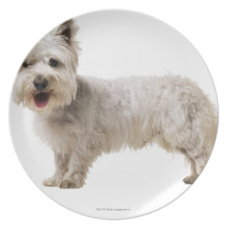 Close up of a terrier plate