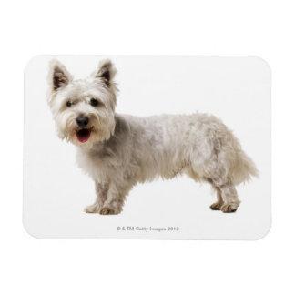 Close up of a terrier rectangular photo magnet