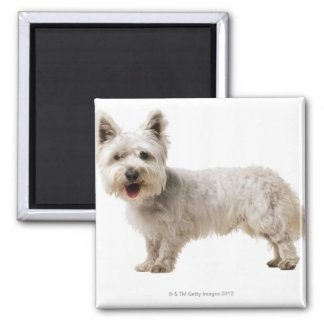 Close up of a terrier square magnet