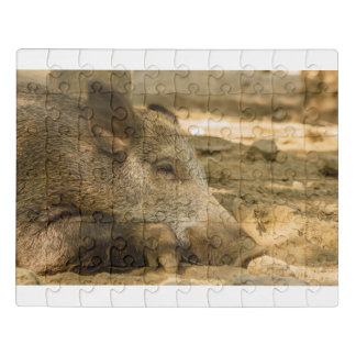 close-up of a wild boar on PUZZLE