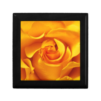 Close Up of a Yellow Rose Small Square Gift Box