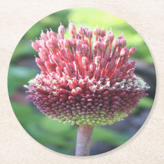 Close Up of An Ornamental Onion or Drumstick Alliu Round Paper Coaster