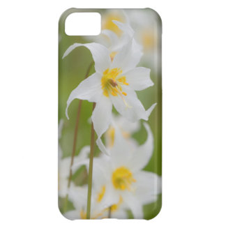 Close-up of avalanche lilies iPhone 5C case