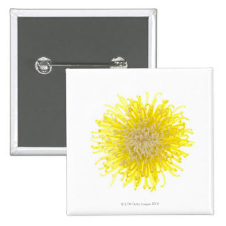 Close up of back lit Chrysanthemum flower head 15 Cm Square Badge