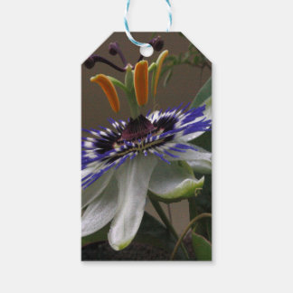 Close Up of Beautiful Passiflora Flower Gift Tags