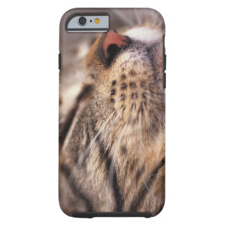 Close-up of cat whiskers and muzzle tough iPhone 6 case