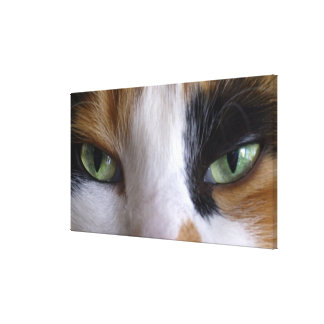 Close-up of cat's eyes canvas print