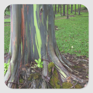 Close-up of colorful eucalyptus tree bark square sticker