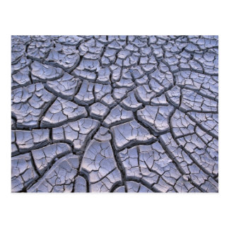 Close Up of Cracked Mud in an Arid Landscape Postcard