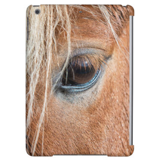 Close-up of eye and head of Icelandic horse