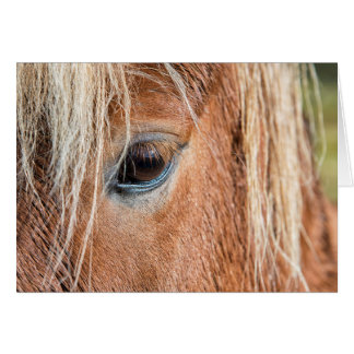 Close-up of eye and head of Icelandic horse Card