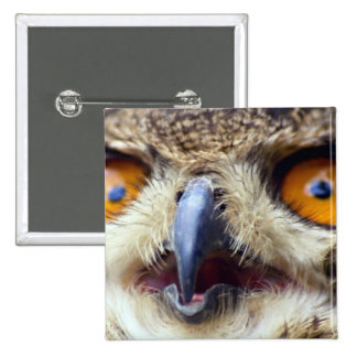 Close-up of eyes of eagle owl pinback button