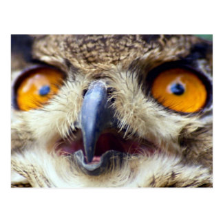 Close-up of eyes of eagle owl postcards