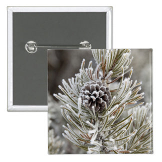 Close-up of frozen pine cone, Yellowstone 15 Cm Square Badge