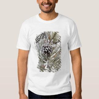 Close-up of frozen pine cone, Yellowstone Tee Shirt