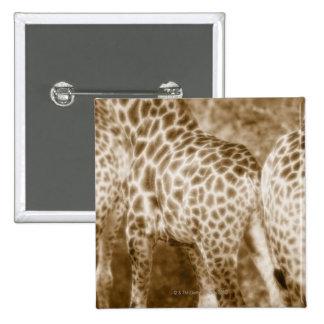 Close-Up of Giraffes Kruger National Park South 15 Cm Square Badge