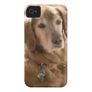 Close up of golden labrador retriever dog iPhone 4 cases