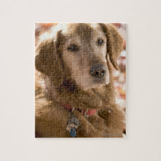 Close up of golden labrador retriever dog jigsaw puzzle