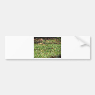 Close up of green grass field and autumn leaves bumper sticker