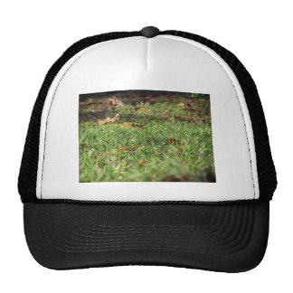 Close up of green grass field and autumn leaves cap