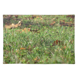 Close up of green grass field and autumn leaves placemat