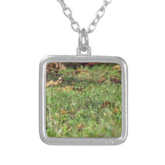 Close up of green grass field and autumn leaves silver plated necklace
