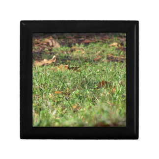 Close up of green grass field and autumn leaves small square gift box