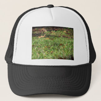 Close up of green grass field and autumn leaves trucker hat