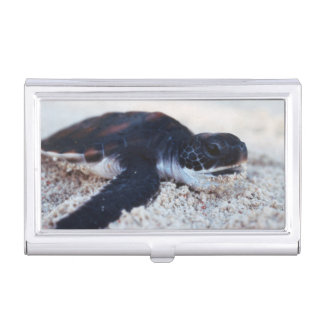 Close-Up of green sea turtle hatchings 1 Business Card Cases