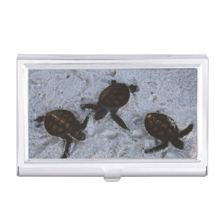 Close-Up of green sea turtle hatchings 2 Business Card Case
