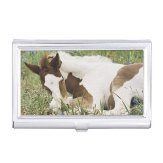 Close-up of Horse and Baby Colt Business Card Holder