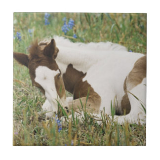 Close-up of Horse and Baby Colt Ceramic Tile