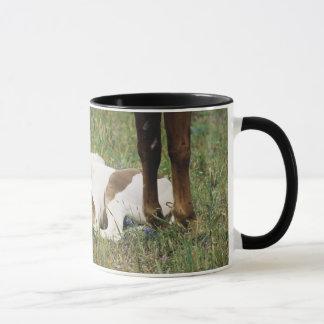 Close-up of Horse and Baby Colt Mug